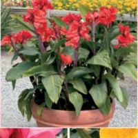 canna_tropical_collection.jpg