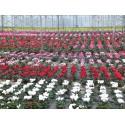 Fonquerny Horticulteur